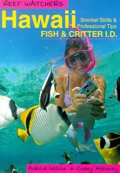 Hawaii Snorkel Skills and Professional Tips